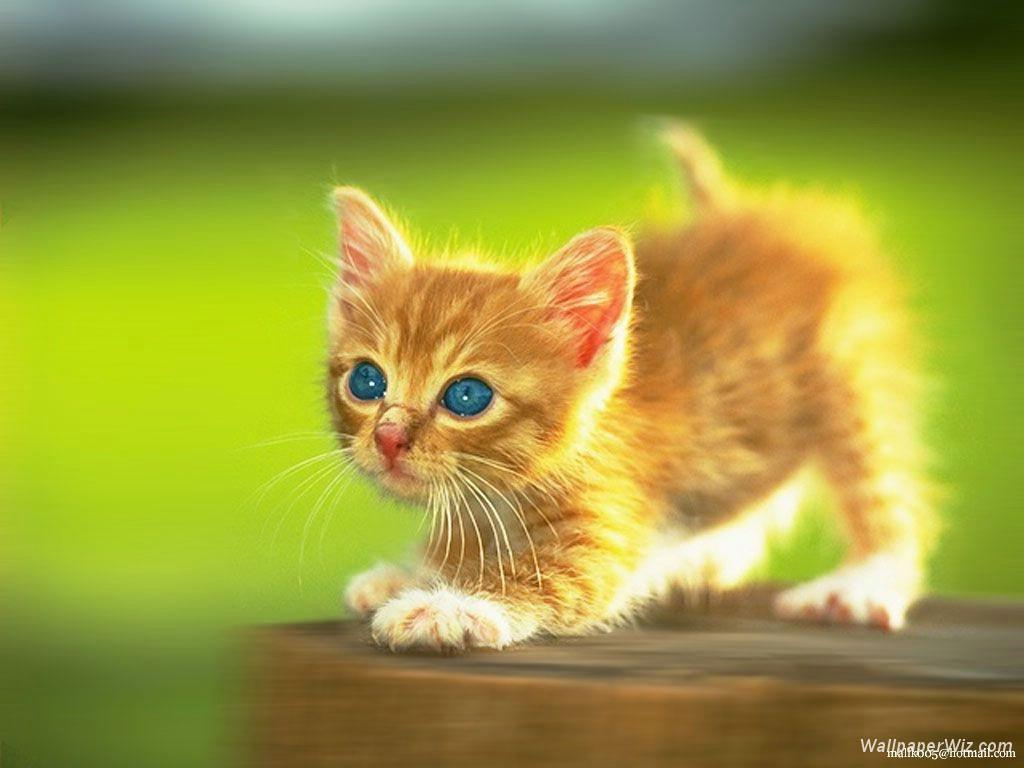 Cute kitten in the green